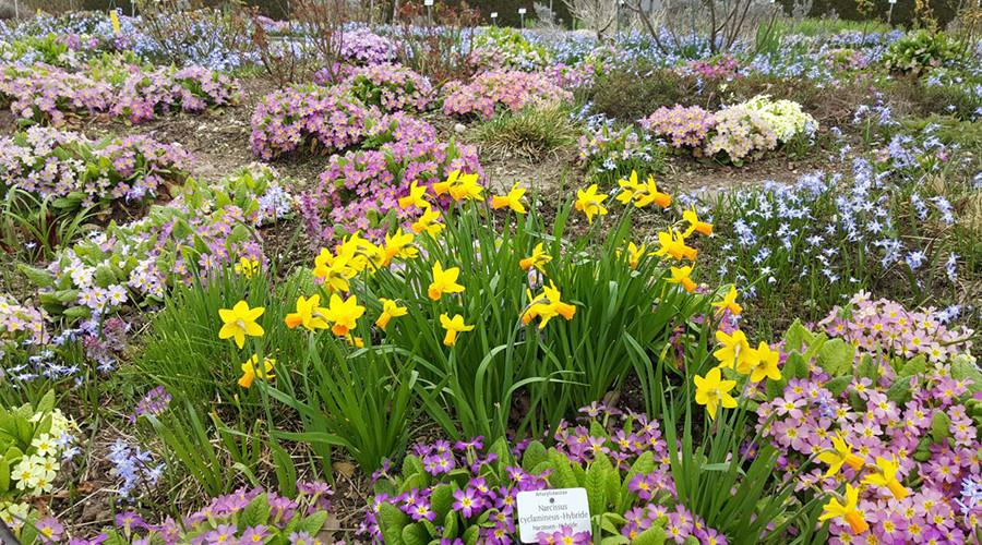 insiderdads-botanischergarten-muenchen-natur-fruehling-draussen
