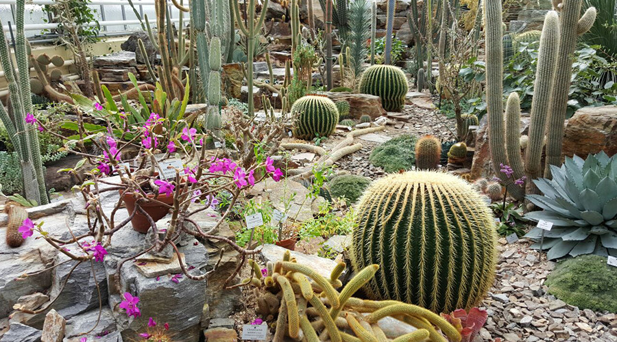insiderdads-botanischergarten-muenchen-natur-kakteen