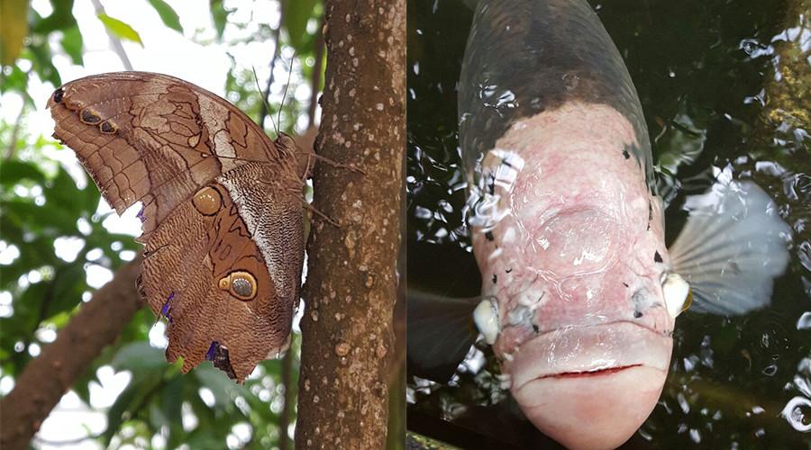 insiderdads-botanischergarten-muenchen-natur-schmetterling-fisch