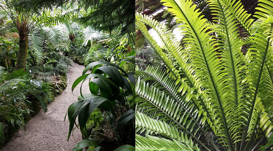 insiderdads-botanischergarten-muenchen-natur-urzeit-farne