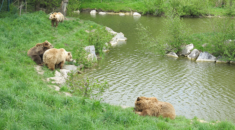 ideas4parents-ausflug-wildparkpoing-natur-baeren