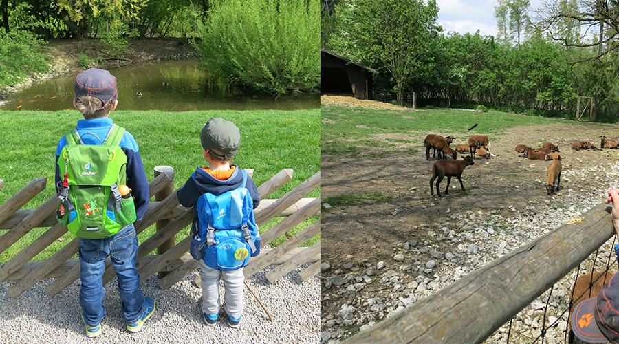 ideas4parents-ausflug-wildparkpoing-natur-tiere-1
