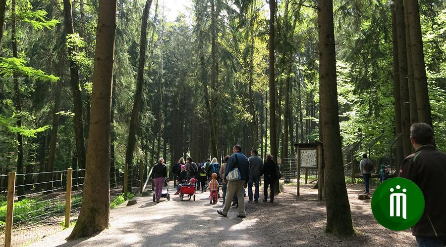 ideas4parents-ausflug-wildparkpoing-natur-waldweg