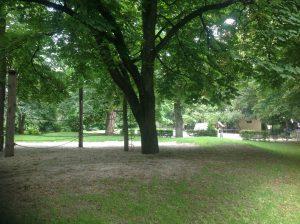 Foto Baum für die Fantasiereise