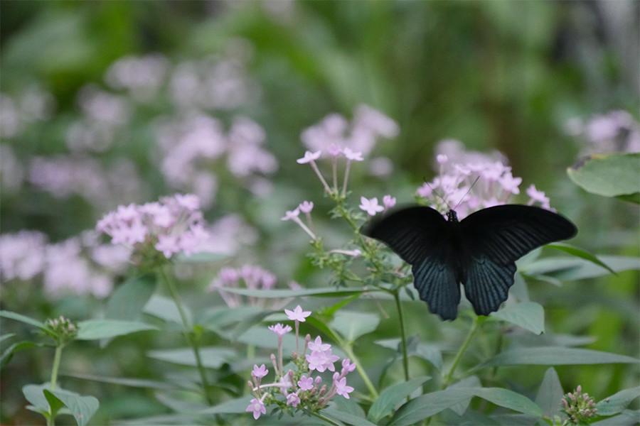 Das Schmetterlingshaus Im Botanischen Garten In München